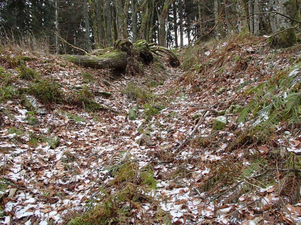 Vielle tranchée Allemande au Sudelkopf